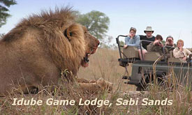 Game Viewing at Idube Game Lodge in Sabi Sands