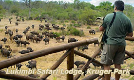 Idube & Lukimbi Safari Deals