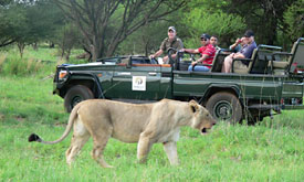 Game Viewing at Mabula Game Lodge, Luxury Safari Lodge, Limpopo Province