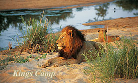 Kings Camp, Timbavati part of the greater kruger National Park
