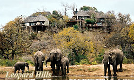 Kruger Park fly in Safaris, Leopard Hills Safari Packages