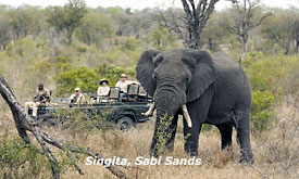 Kruger Park Safari Deals, Singita Sabi Sands