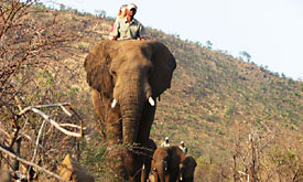 Sun City Holiday Resort in South Africa, Elephant Back Safaris