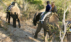 Elephant Back Safari, Victoria Falls, Holiday Packages in Victoria Falls