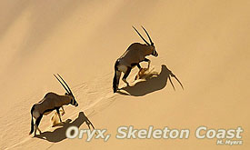 Oryx, Namibia Safari ,Namibia Safari Destinations, Namibia Tours & Safari Vacations