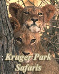 Kruger Park Safaris,Fly In Packages from Johannesburg