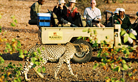 Mashatu Game Reserve, Game Viewing