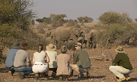Safari Packages, Mashatu Game Reserve, Walking Safaris