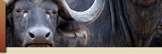 Idube Game Lodge, Kruger National Park, South Africa, Safari Packages