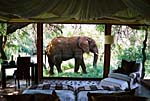 Makanyane Safari Lodge, African Big Five Safari