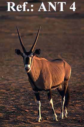African Animals with Long Horns http://www.wildlifeafrica.co.za/wildlife-pictures-ant4.html